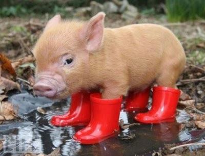 piglet_in_wellies
