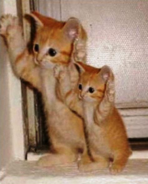 copy_cat