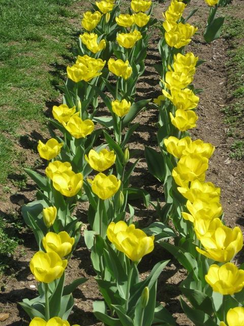 3-spring